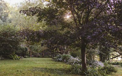 Complete Guide to Pruning and Trimming Trees