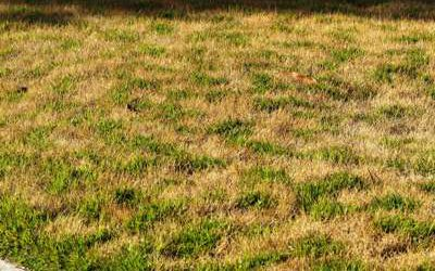 Why Does My Grass Look Discolored?