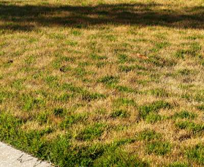 Why Does My Grass Look Discolored Garden Guard
